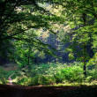 Beautiful green forest — Stock Photo #31750625
