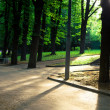Beautiful avenue in to the park — Stock Photo