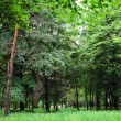 Nature green wood sunlight backgrounds — Stock Photo #31750763