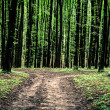 Beautiful green forest — Stock Photo #31751075