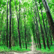 Beautiful green forest — Stock Photo #31751115
