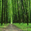 Beautiful green forest — Stock Photo #31751231