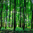 Beautiful green forest — Stock Photo #31751411