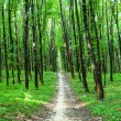 Beautiful green forest — Stock Photo #31751425