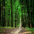 Beautiful green forest — Stock Photo #31751459