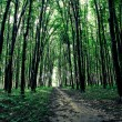 Beautiful green forest — Stock Photo #31751495