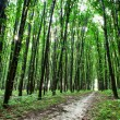 Beautiful green forest — Stock Photo #31751625