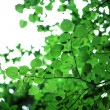 Green leaves with sun — Stock Photo