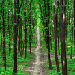 Beautiful green forest — Stock Photo #31751707