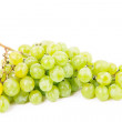 Stock Photo: Vine isolated on a white background