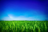 Green grass under blue sky — Stock Photo
