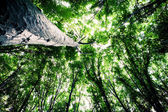 Forest trees nature green wood sunlight backgrounds — Stock Photo