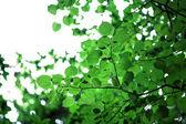 Grüne blätter mit sonne — Stockfoto