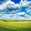 Field with white clouds — Stock Photo #35067493
