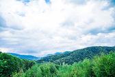 Folhagem de árvores verdes — Fotografia Stock