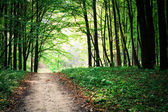 Pathway in Green forest — Stock Photo