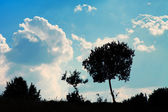 Solitude tree silhouette — Stock Photo