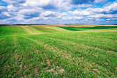 Spring Field with clouds — Stock Photo