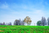 Green field with trees — Stock Photo