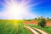 поле с солнечным светом — Стоковое фото