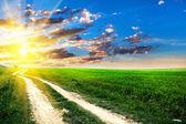 Sommer-Feld mit Sonnenlicht — Stockfoto