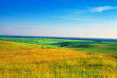 Yellow field and hills — Stock Photo