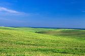 Field over blue sky — Stock Photo