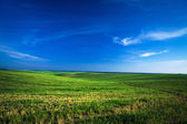 Field over blue sky — Stock Photo