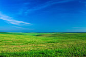 Green field over blue sky — Stock Photo