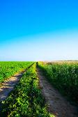 Path in green grass — Zdjęcie stockowe