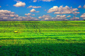 Grönt fält under blå himmel — Stockfoto
