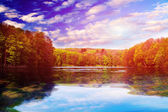 Picturesque forest and the river — Stock Photo