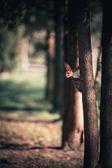 Wiewiórka — Zdjęcie stockowe