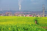 Beautiful morning green field — Stock Photo