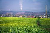 Campo verde, sob o céu azul — Fotografia Stock