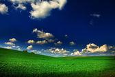 Green field with blue heaven — Stockfoto