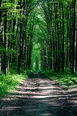 Weg im grünen wald — Stockfoto