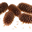 Variation on a theme of fir-cone — Stock Photo