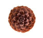 Variation on a theme of fir-cone — Foto de Stock