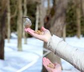 Nuthatch on palm — Stock Photo