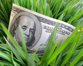 Dollars in green grass — Stock Photo