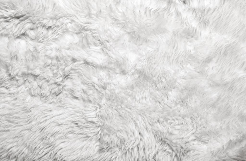 White fur background. Close up  Stock Photo #12641888