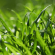 Royalty-Free Stock Photo: Green Grass background