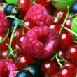 Mixed Berries background — Stock Photo