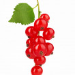 Red Currant with leaf — Stock Photo