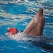 Dolphin dancing with ball — Stock Photo #34572471