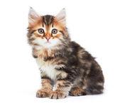Little Kitten — Stock Photo