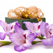 Stock Photo: Beautiful gladiolus and gift box on a white background.