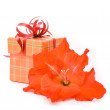 Stockfoto: Beautiful gladiolus and gift box on white background.