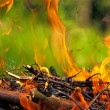 Fire from burning wood — Stock Photo